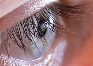300px-N2_Human_eye
